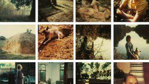 Andrei Tarkovsky Polaroids: His Luminous World
